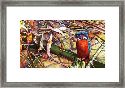 Pond Life Framed Print
