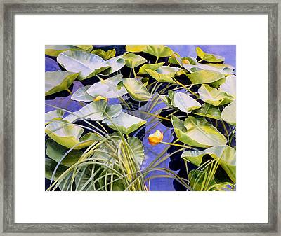 Pond Lilies Framed Print by Sharon Freeman