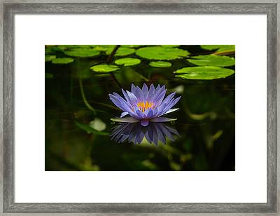Pond Lily Framed Print by Garry Gay