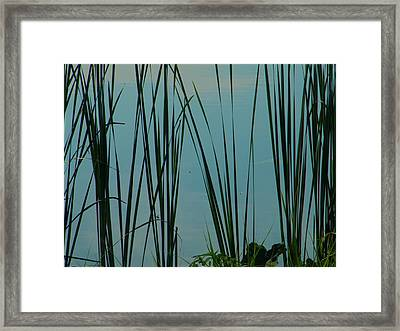 Pond Framed Print by Nereida Slesarchik Cedeno Wilcoxon