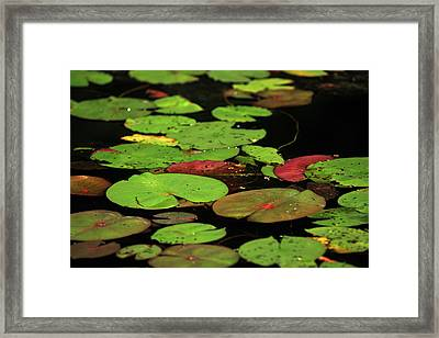 Pond Pads Framed Print by Karol Livote