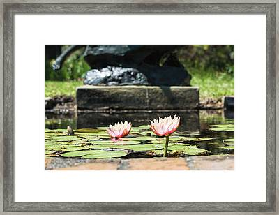 Pond Palette Framed Print