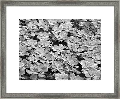 Pond Plants Framed Print by Juergen Roth