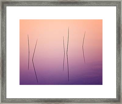 Pond Reeds - Abstract Framed Print by Thomas Schoeller