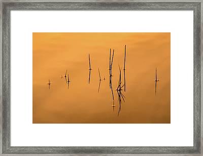 Pond Reeds In Reflected Sunrise Framed Print