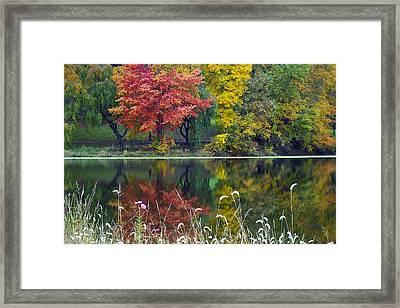 Pond Reflect Framed Print