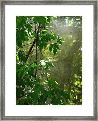 Pond Reflection 2 Framed Print