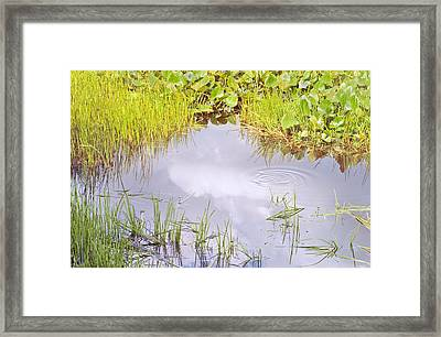 Pond Ripples Photo Framed Print by Peter J Sucy