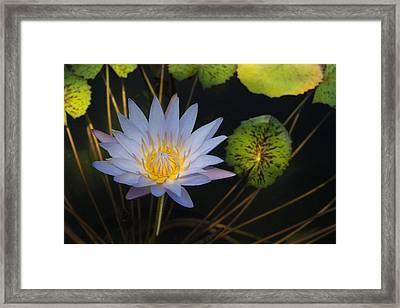 Pond Star Framed Print by Robert Anschutz