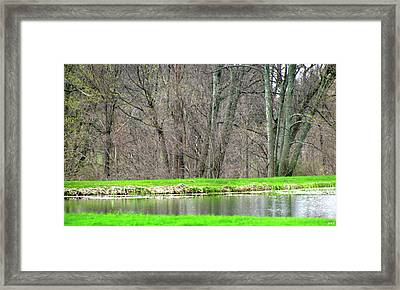 Pond Starts To Grow Framed Print by Debra     Vatalaro