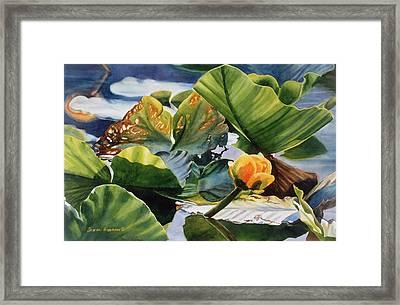 Pond Textures Framed Print by Sharon Freeman