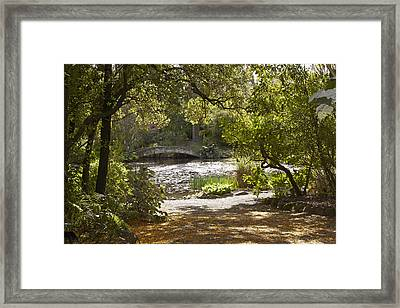 Pond View With Kowhai Petals Framed Print by Geoff Bryant