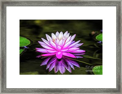 Pond Water Lily Framed Print