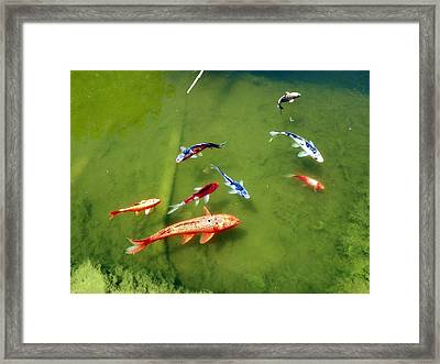 Pond With Koi Fish Framed Print by Joseph Frank Baraba