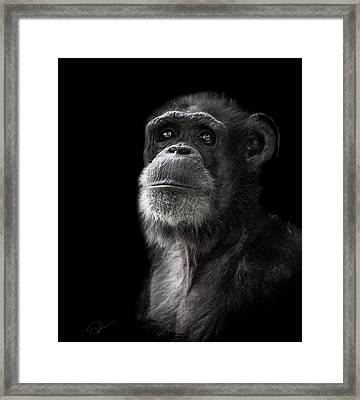 Ponder Framed Print by Paul Neville