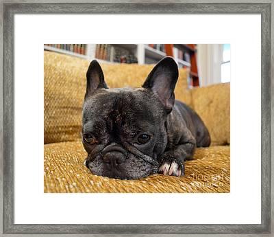 Pondering Pup Framed Print