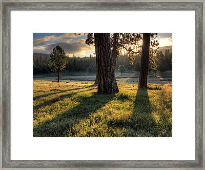 Ponderosa Pine Meadow Framed Print by Leland D Howard