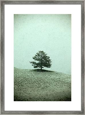 Ponderosa Pine Framed Print by Todd Klassy
