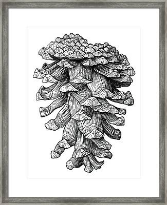 Ponderosa Pinecone Framed Print by Kirsten Wahlquist