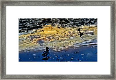 Pondscape Framed Print