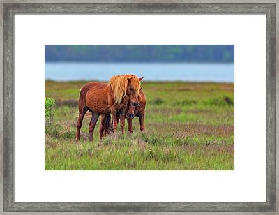 Ponies On Assateague Framed Print by Rick Berk