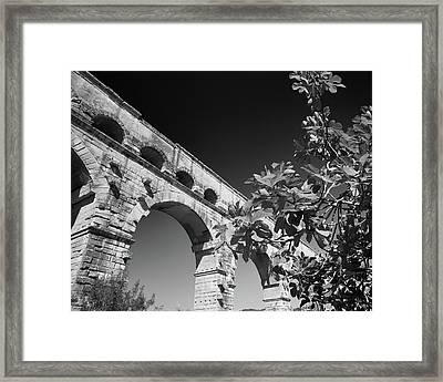 Pont Du Gard And Fig Tree Framed Print by Richard Goodrich