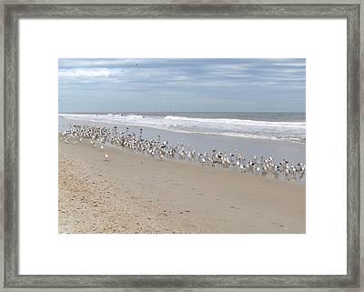 Ponte Vedra Birds Framed Print by Carol  Bradley