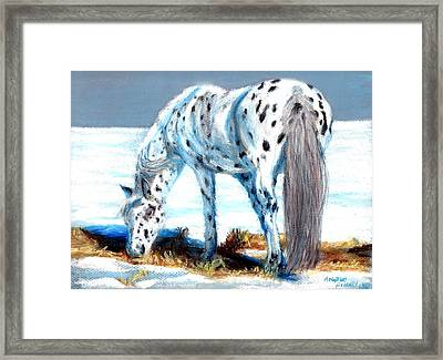 Pony At Winter Pasture Framed Print by Angela Finney