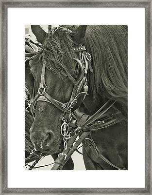 Pony Rides Framed Print by Dressage Design