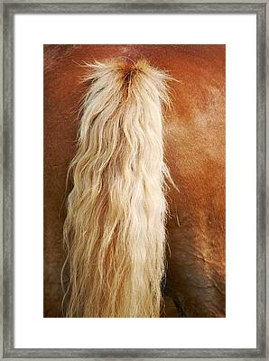 Pony Tail Framed Print