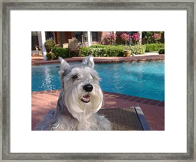 Pooch At Poolside Framed Print