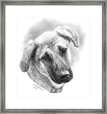 Pooch Framed Print by Reed Palmer