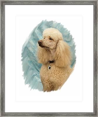 Poodle 05 Framed Print by Larry Matthews