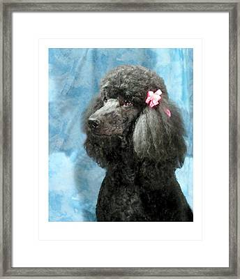 Poodle 964 Framed Print by Larry Matthews