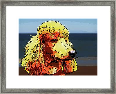Poodle Framed Print by Alexey Bazhan