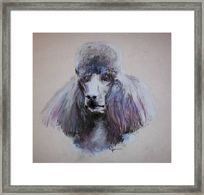Poodle In Blue Framed Print
