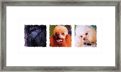 Poodle Trio Framed Print
