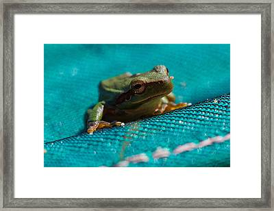 Framed Print featuring the photograph Pool Frog by Richard Patmore