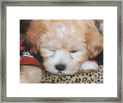 Framed Print featuring the photograph Pooped Pup by Diane Merkle