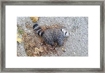 Poor Trash Panda Framed Print