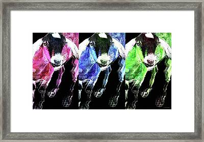 Pop Art Goats Trio - Sharon Cummings Framed Print