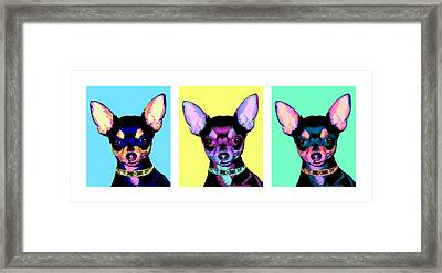 Pop Chihuahua Framed Print by Laura Sotka