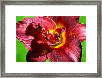 Pop Framed Print by Don Prioleau