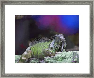 Pop Iguana Edition 2 Framed Print by Judy Kay