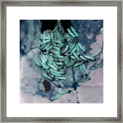 Framed Print featuring the photograph Pop Macro No. 1 by Laura Melis