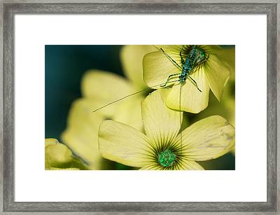 Framed Print featuring the photograph Pop Macro No. 2 by Laura Melis