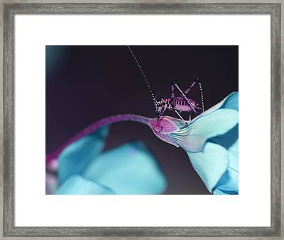 Framed Print featuring the photograph Pop Macro No. 3 by Laura Melis