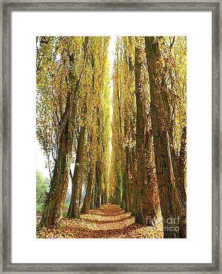 Poplar Avenue Framed Print by Alex Cassels