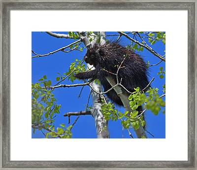 Poplar Breakfast Framed Print