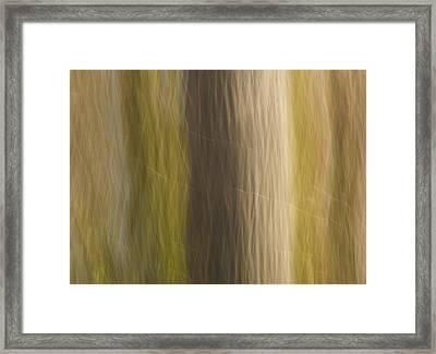 Poplar Framed Print
